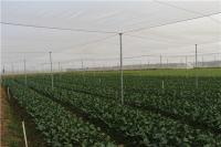 清水江蔬菜种植基地